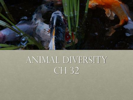 Animal diversity Ch 32. Overview: Welcome to Your Kingdom The animal kingdom extends far beyond humans and other animals we may encounterThe animal kingdom.