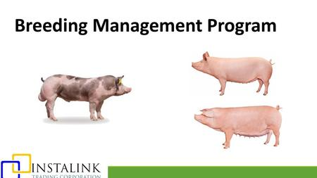 Breeding Management Program