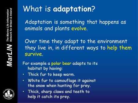 What is adaptation? For example a polar bear adapts to its habitat by having: Thick fur to keep warm. White fur to camouflage it against the snow when.