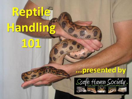 Reptile Handling 101...presented by. Common Reptiles in Captivity.