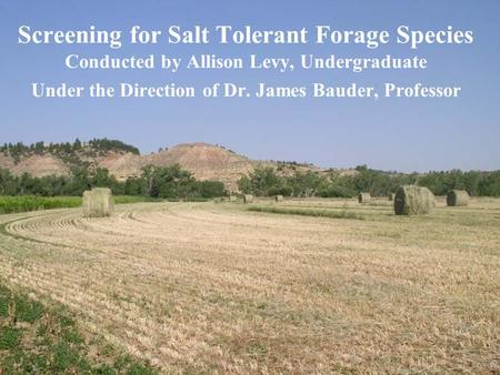 Screening for Salt Tolerant Forage Species Conducted by Allison Levy, Undergraduate Under the Direction of Dr. James Bauder, Professor.