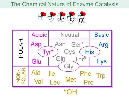 The Chemical Nature of Enzyme Catalysis POLAR NON- POLAR Tyr*His Gly AcidicNeutralBasic Asp Glu Gln Cys Asn Ser* Thr* Lys Arg Ala Val Ile Leu Met Phe Trp.