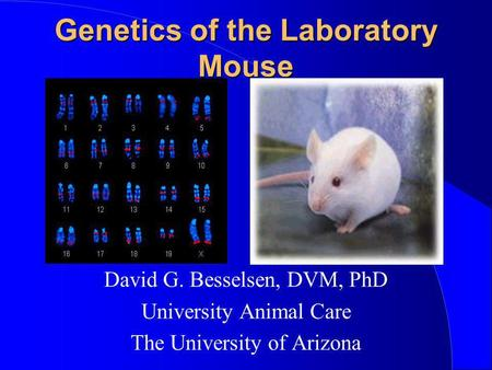 Genetics of the Laboratory Mouse David G. Besselsen, DVM, PhD University Animal Care The University of Arizona.