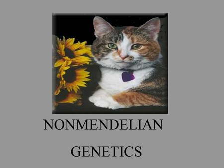 NONMENDELIAN GENETICS. INCOMPLETE DOMINANCE DEFINITION: When neither allele is dominant over the other. When the two alleles are found together, they.