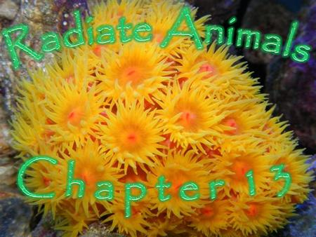 Radiate Animals C h a p t e r 1 3.