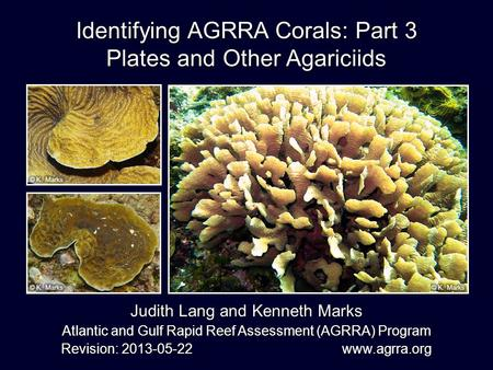 Identifying AGRRA Corals: Part 3 Plates and Other Agariciids
