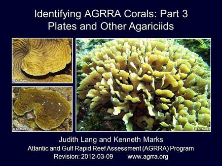 Identifying AGRRA Corals: Part 3 Plates and Other Agariciids Judith Lang and Kenneth Marks Atlantic and Gulf Rapid Reef Assessment (AGRRA) Program Revision:
