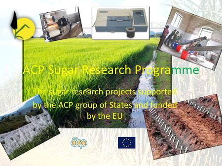 ACP Sugar Research Programme 1 The sugar research projects supported by the ACP group of States and funded by the EU.