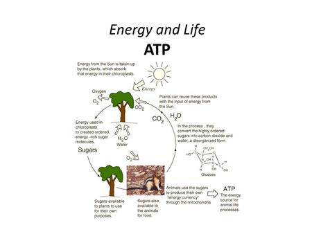 Energy and Life ATP. ATP:  Adenosine triphosphate.  Has unstable phosphate bonds.  Used by cells as an energy source for cellular activity.  Produced.