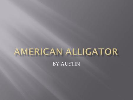 BY AUSTIN.  THE AMERICAN ALLIGATOR CAN BE UP TO EIGHTEEN FEET LONG.  THE AMEICAN ALLIGATOR CAN WEIGH UP TO 600 POUNDS.