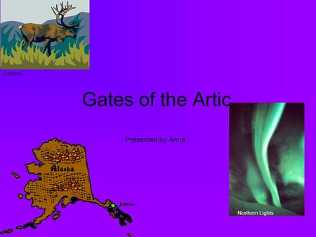 Gates of the Artic Presented by Anna Caribou Northern Lights.