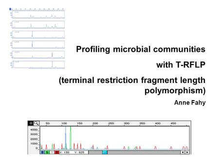 Profiling microbial communities with T-RFLP (terminal restriction fragment length polymorphism) Anne Fahy.