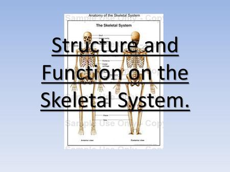 Structure and Function on the Skeletal System.. Structure of the Skeleton We know that the 206 bones of the skeleton are split into two different groups…