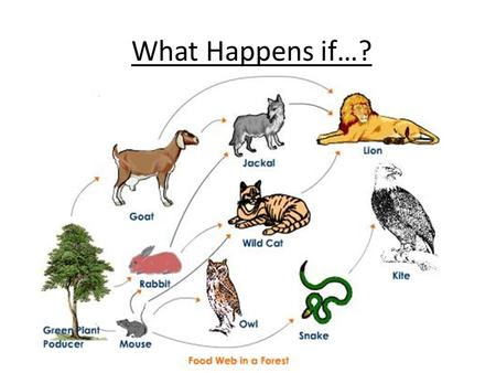 What Happens if…?. We need to know the impact on the food chains: Example: What happens if we cut down the trees? 1._____________ 2._____________ 3._____________.