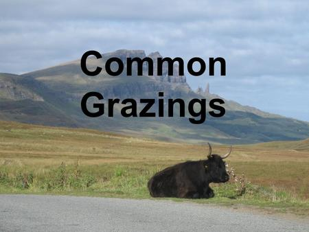 Common Grazings. Common Problems Grazings Committees Approx.1000 Common Grazings 352 (34%) with registered Grazings Committees.