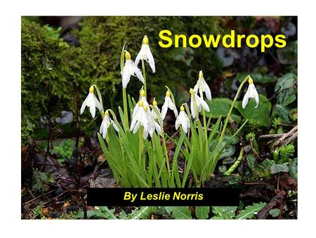 Snowdrops By Leslie Norris. This story is important as much for what we do not learn directly as for the surface narrative. The story appears to be.