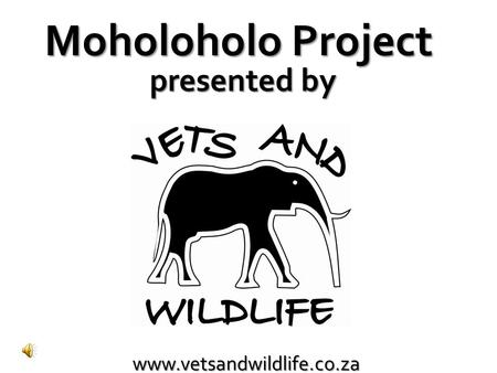 Www.vetsandwildlife.co.za Moholoholo Project presented by.
