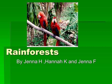 Rainforests By Jenna H,Hannah K and Jenna F. Contents  Where are the rainforests?……….Page 1  Animals in the rainforest…………Page 2  Trees in the rainforest…………..Page.