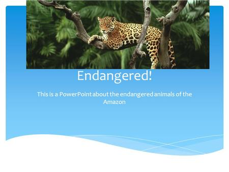 Endangered! This is a PowerPoint about the endangered animals of the Amazon.