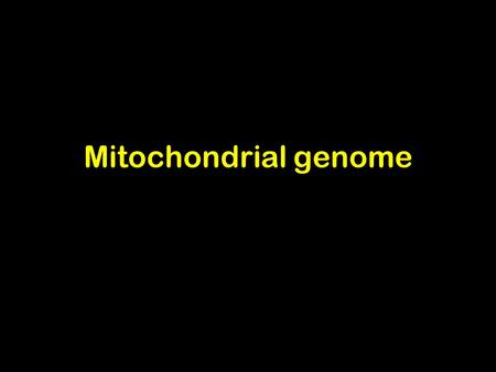 Mitochondrial genome. Mitochondria Human mitochondrial DNA Multicopy (466-806 nucleoids /cell) 16,569 bp length and 0.68  M diameter Genes lack introns.