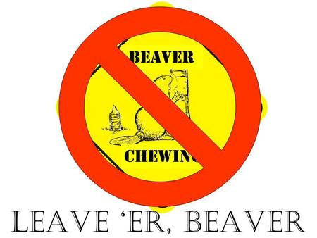 CHEWING beaver LEAVE 'ER, BEAVER. The Farm, Elmvale, 1938. There were almost no trees along the Wye River, having been cut when the original forests were.