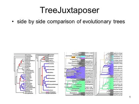 1 TreeJuxtaposer side by side comparison of evolutionary trees.