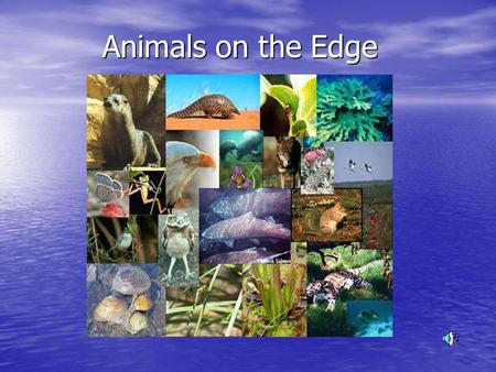 Animals on the Edge Global warming <strong>and</strong> its Impact on Animals.