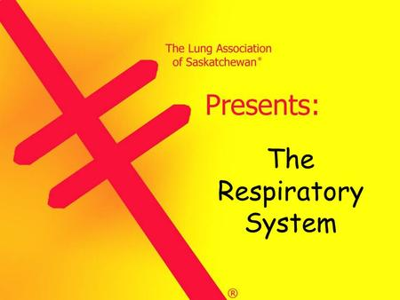The Respiratory System The Lung Association of Saskatchewan © The respiratory system is what we use to breathe. It may seem simple to breathe, but it's.