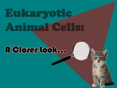  Located around the outside of the cell  Contains proteins and lipids  Surrounds the cytoplasm of a cell  Serves almost the same purpose as skin Cell.