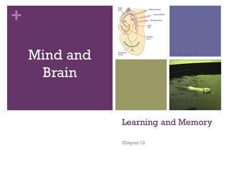 + Learning and Memory Chapter 13 Mind and Brain. + You are responsible for Chapter 13 (text and notes) for you final as well as all other chapters (and.