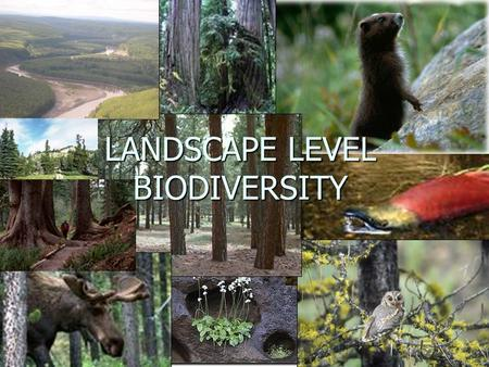 LANDSCAPE LEVEL BIODIVERSITY. Relevant FREP questions 1. Are ecosystems represented across the landscape in time and space? 2. Is there a sufficient degree.