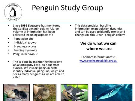 Penguin Study Group Since 1986 Earthcare has monitored the St Kilda penguin colony. A large volume of information has been collected including aspects.