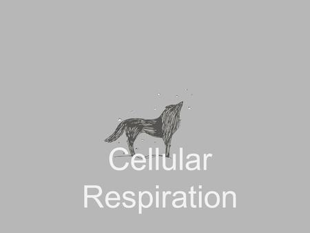 Cellular Respiration. C 6 H 12 O 6 + 6O 2  6CO 2 + 6H 2 O Glucose + Oxygen  Carbon dioxide + water.