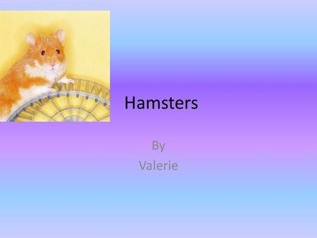 Hamsters By Valerie.