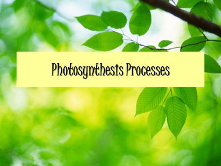 Photosynthesis Processes. Overview Absorption of light energy – Sun hits chloroplasts Conversion to chemical energy – Light dependant reaction Storage.