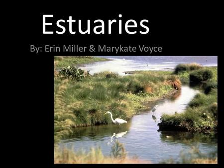 Estuaries By: Erin Miller & Marykate Voyce. What is it? Coastal area where freshwater from rivers and streams mixes with saltwater from the ocean.
