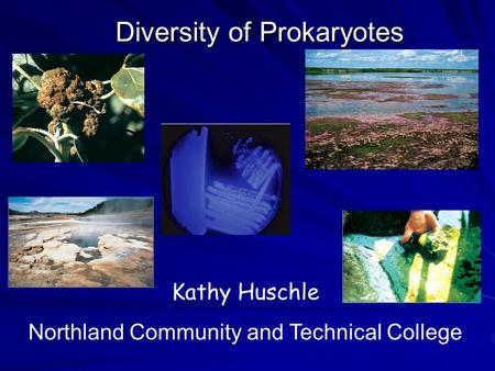 Diversity of Prokaryotes Kathy Huschle Northland Community and Technical College.