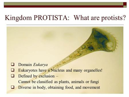 Kingdom PROTISTA: What are protists?  Domain Eukarya  Eukaryotes have a Nucleus and many organelles!  Defined by exclusion – Cannot be classified as.