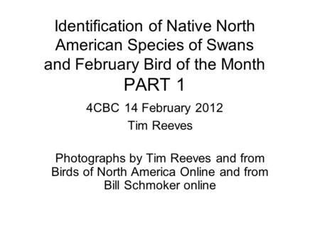 Identification of Native North American Species of Swans and February Bird of the Month PART 1 4CBC 14 February 2012 Tim Reeves Photographs by Tim Reeves.