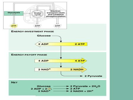 Glycolysis Krebs Cycle  Transition of Glycolysis to Krebs Cycle : 1) Pyruvates enter mitochondria 2) Pyruvates converts to Acetyl CoA via. transport.