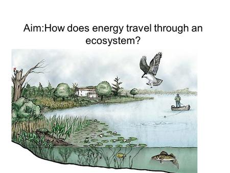 Aim:How does energy travel through an ecosystem?.