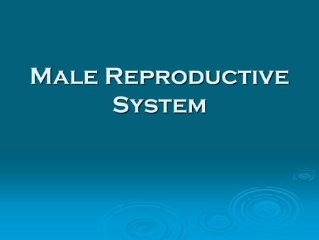 Male Reproductive System. What's the purpose? To produce sperm and deliver it to the female reproductive system.To produce sperm and deliver it to the.