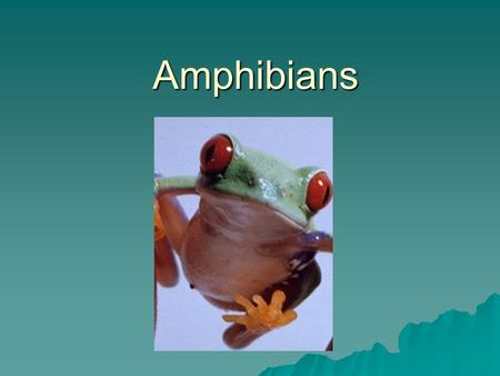 Amphibians Amphibians. What is an amphibian?  Amphibians can be defined as vertebrates that are aquatic as larvae and terrestrial as adults, breathe.