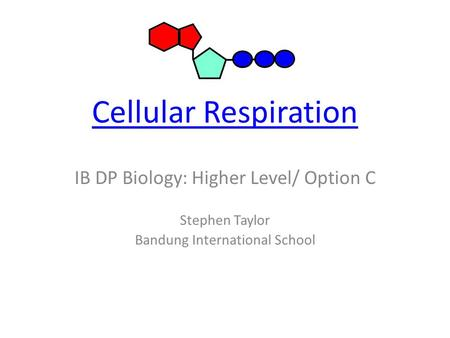 Cellular Respiration IB DP Biology: Higher Level/ Option C Stephen Taylor Bandung International School.