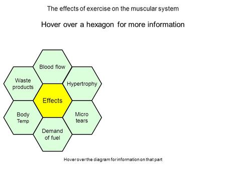 Hover over the diagram for information on that part The effects of exercise on the muscular system Hover over a hexagon for more information Effects Hypertrophy.