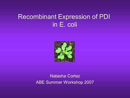 Recombinant Expression of PDI in E. coli Natasha Cortez ABE Summer Workshop 2007.
