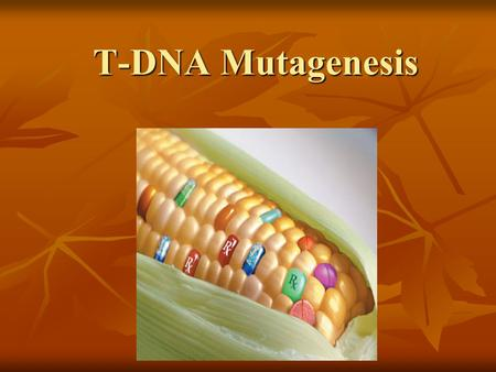 T-DNA Mutagenesis T-DNA Mutagenesis. Transfer-DNA Mutagenesis: a chemical or physical treatment that creates changes in DNA sequence which can lead to.