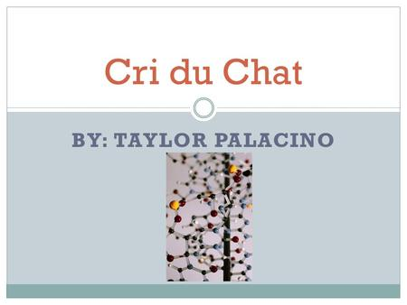 Cri du Chat By: Taylor Palacino.
