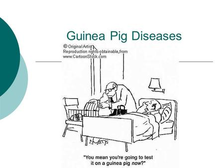 Guinea Pig Diseases. Antibiotic toxicity  Antibiotics may suppress clinical signs but usually do not eliminate the organism and fatal antibiotic-induced.