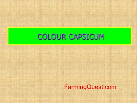 COLOUR CAPSICUM FarmingQuest.com.